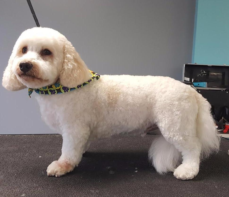 All star pet grooming coupons near me in warminster 8coupons for Dog grooming salons near me
