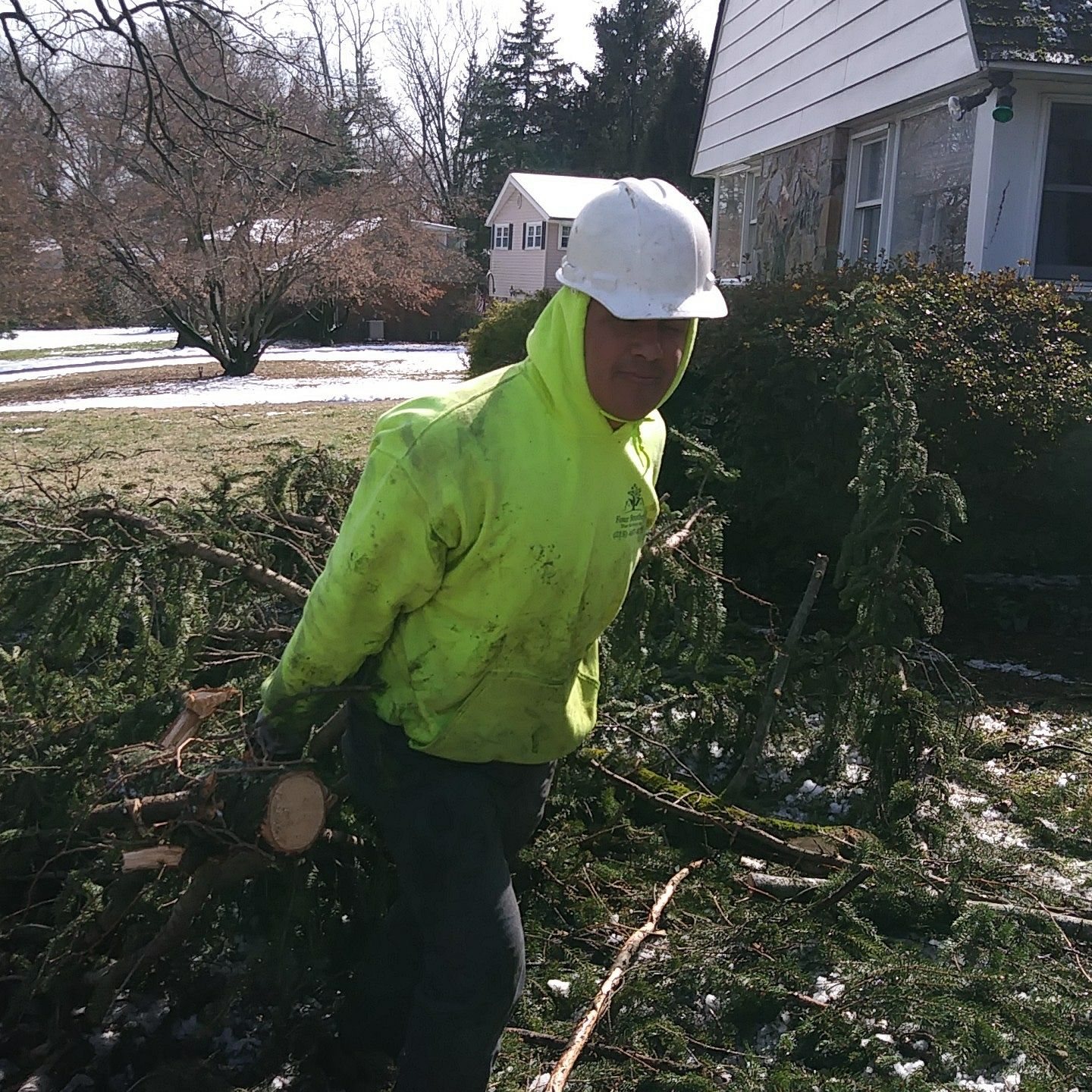 Four Brothers Tree Service Inc. image 4