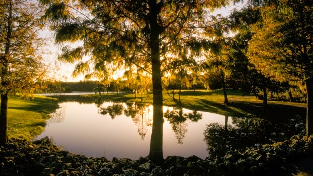 Walt Disney World Resort Golf image 1