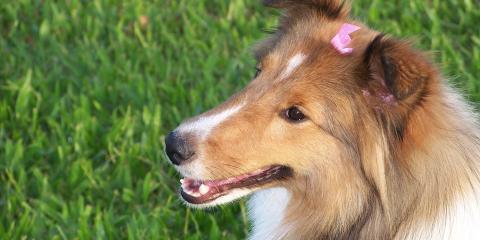 Bar-King Dog Kennel image 7