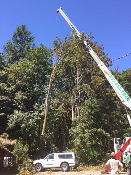 Archon Tree Services, Inc. image 0