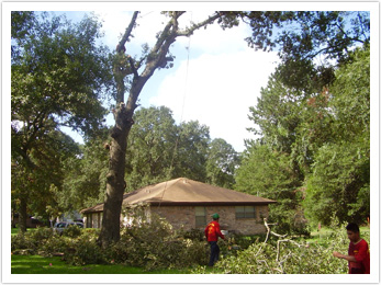Houston Tree Team image 15