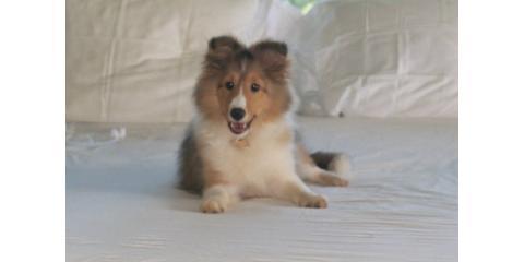 Bar-King Dog Kennel image 0