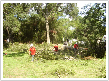 Houston Tree Team image 11