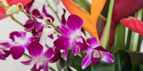 Watanabe Floral, Inc.
