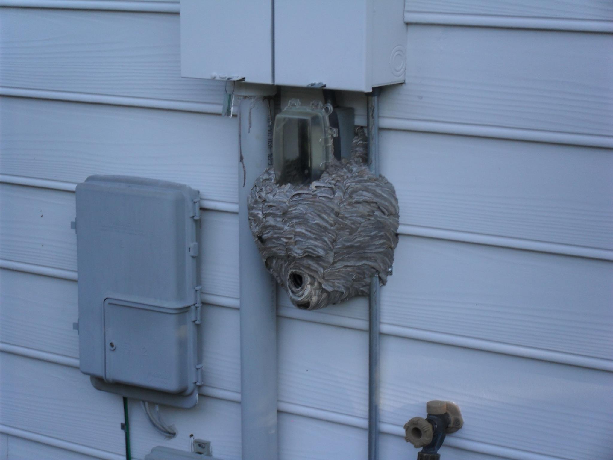 Guardian Pest Solutions image 1