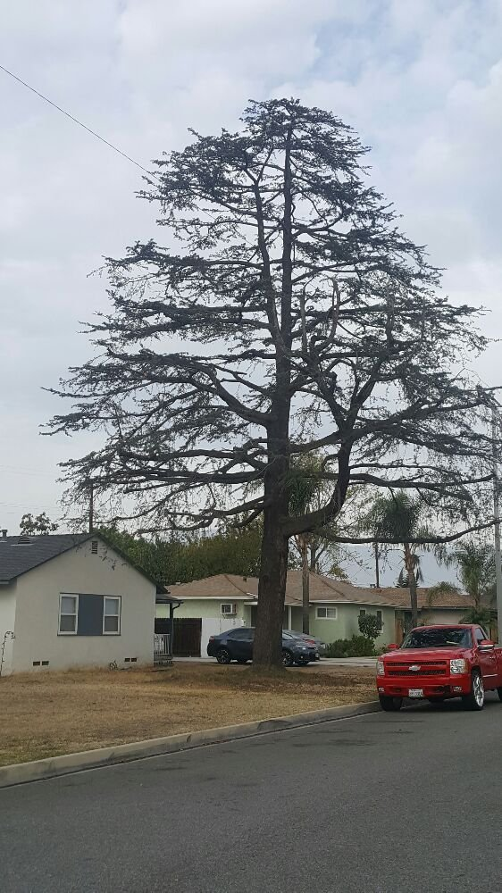 Golden State Tree Service image 5