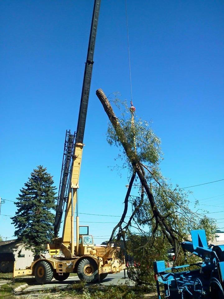 A-1 Tree Service, LLC image 2