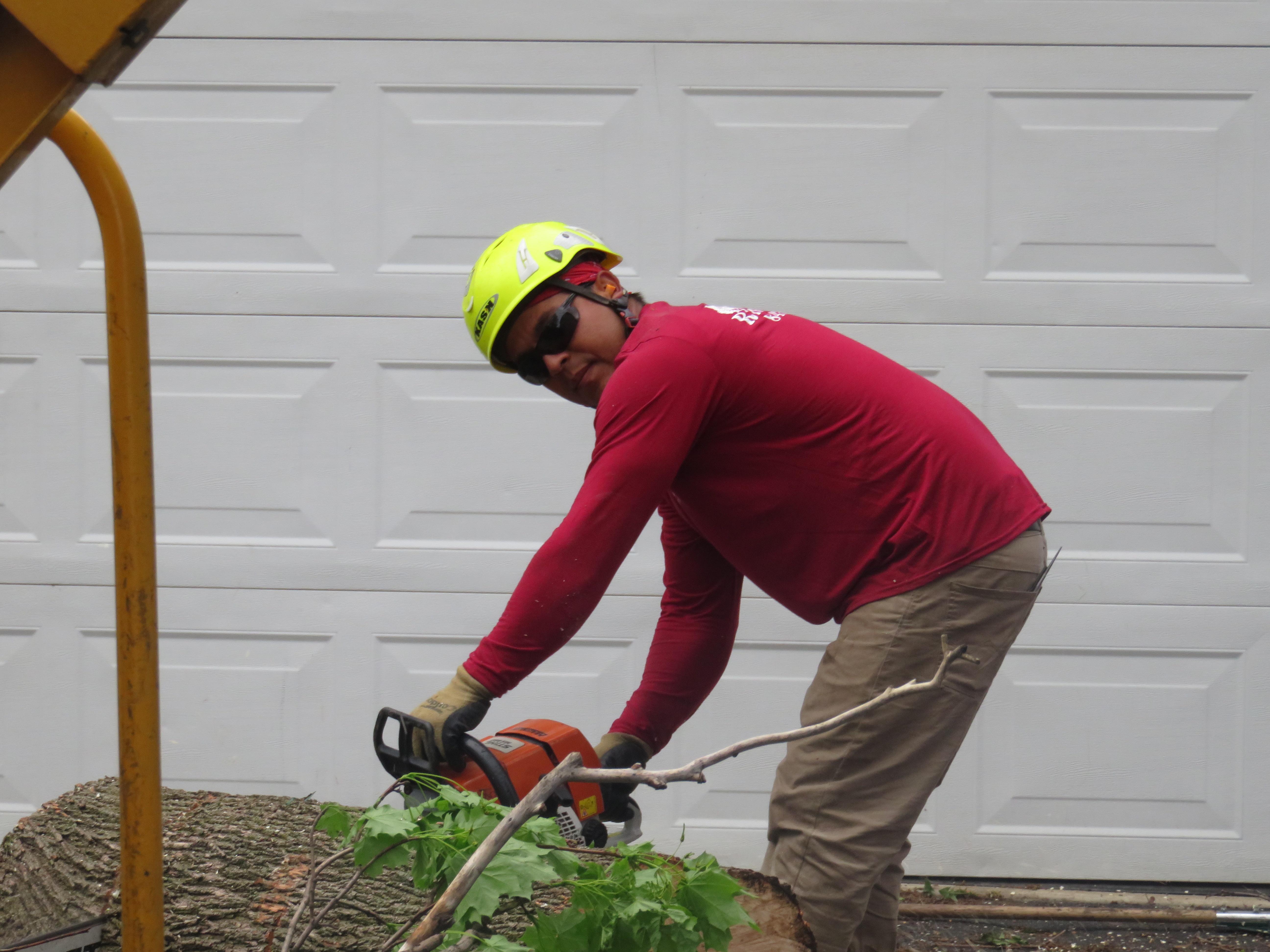 Rivas Tree Service image 2