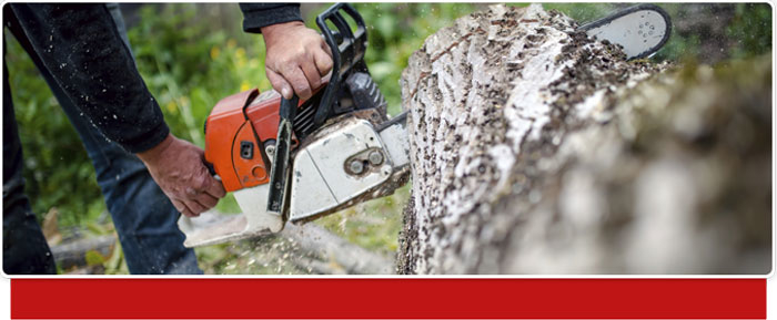 Frontier Tree & Pest Control image 1