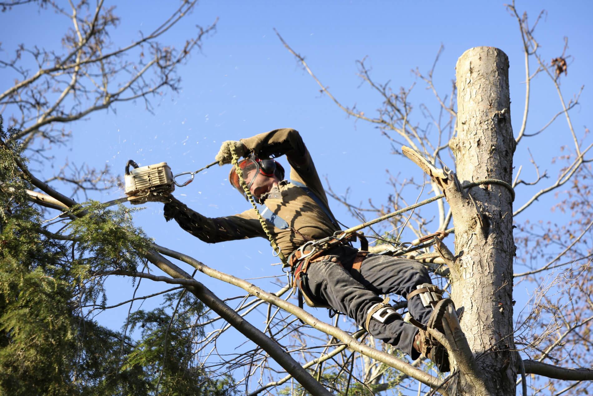 Ax Men Tree Service LLC image 0