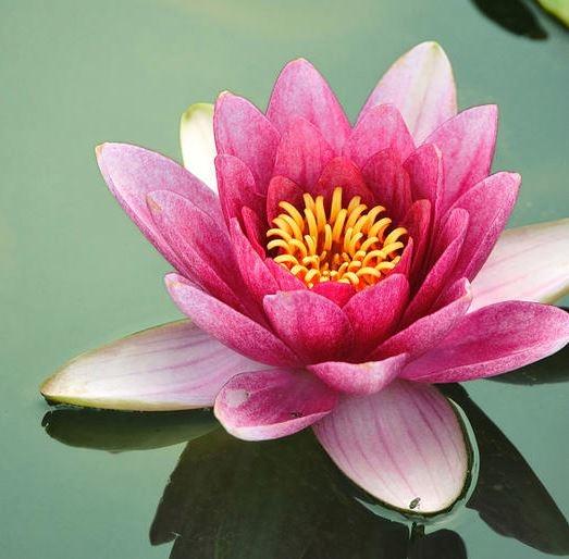 The Lotus Spa & Tea