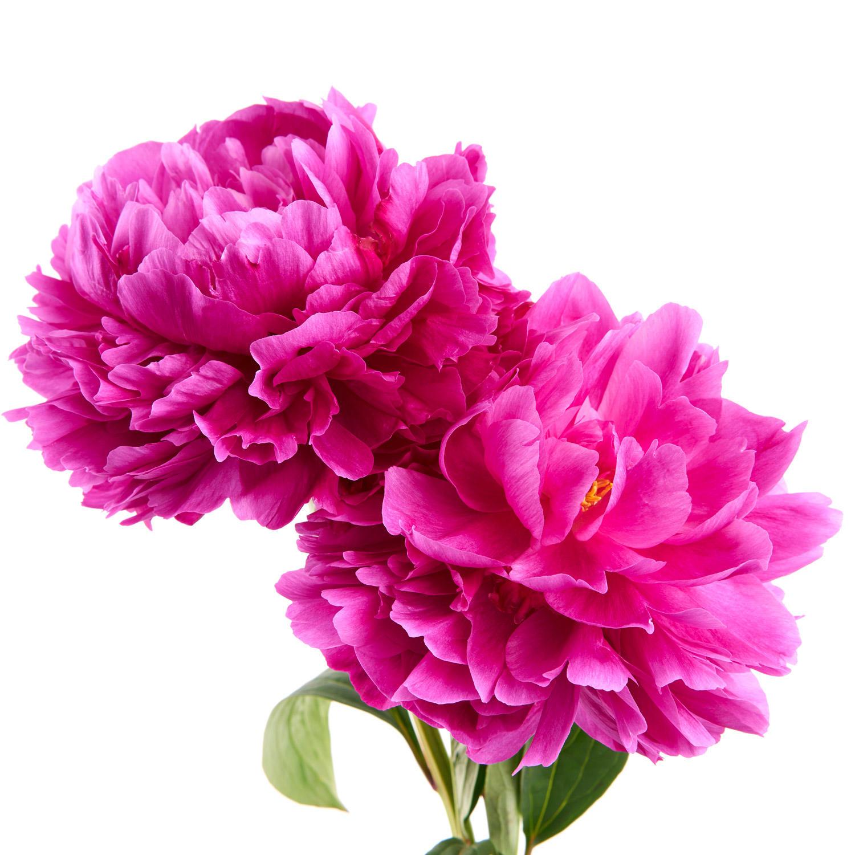 FMI Farms Flower Wholesale image 0