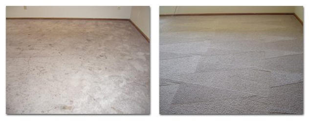 Go Green Dry Carpet Cleaning image 4