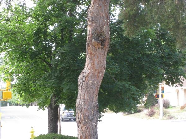 Swingle Lawn, Tree & Landscape Care image 12
