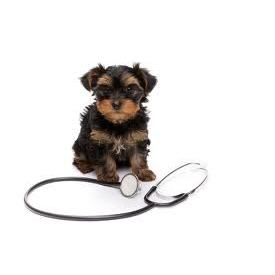 Veterinarian in CA Agoura Hills 91301 Agoura Hills Animal Hospital 5605 Kanan Rd (747)200-0964