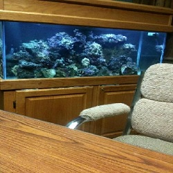 All Seas Aquarium Service image 3