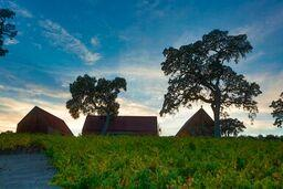 Treana Winery image 3