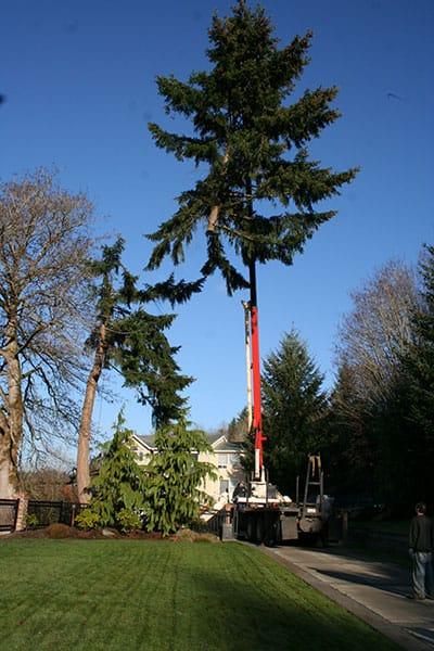 Archon Tree Services, Inc. image 13