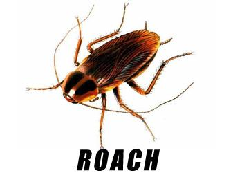 Rosenbloom Pest Control, Inc. image 9