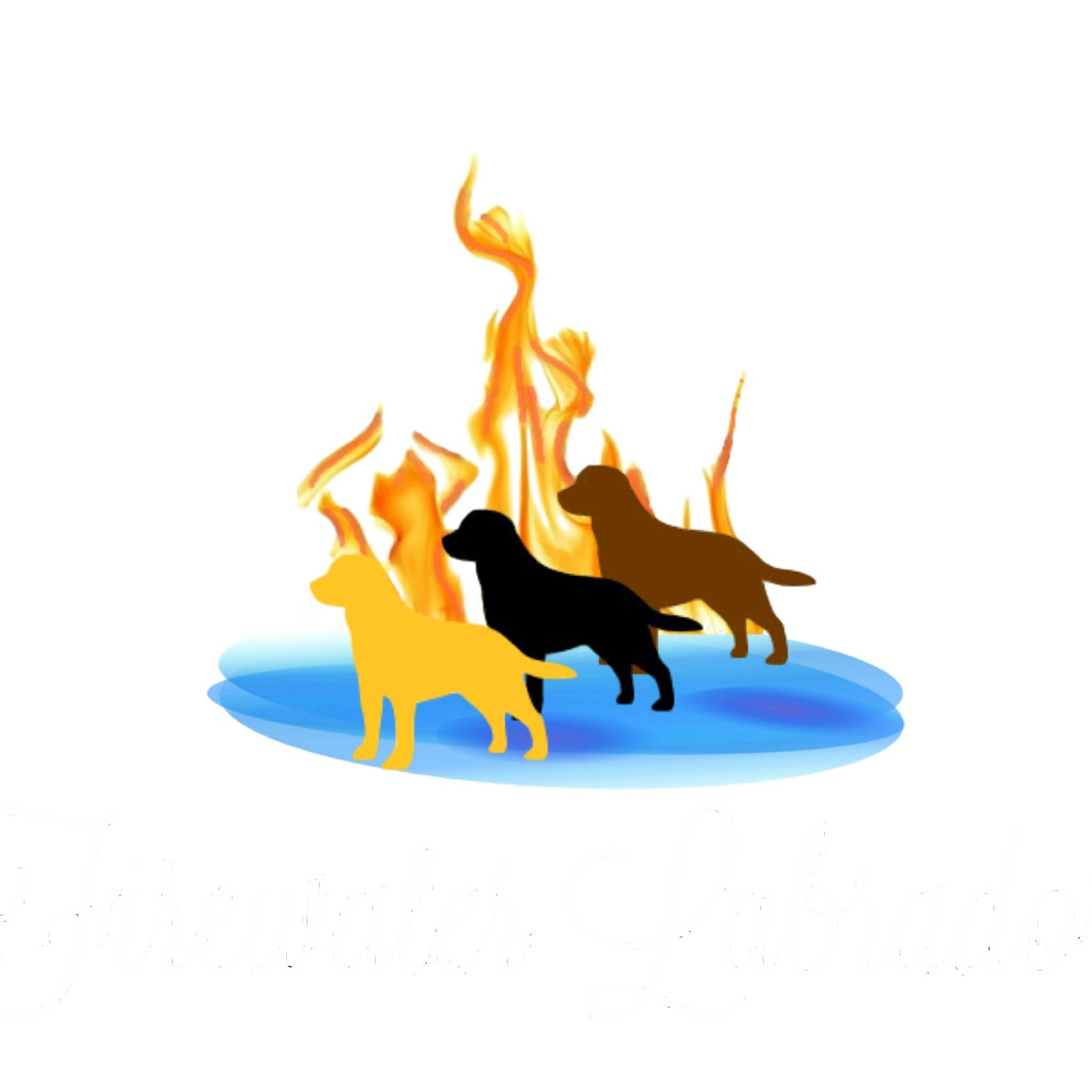 Fire Water Labrador Retrievers image 0