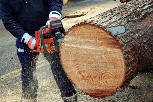 Garcia Amigo Tree Service image 1