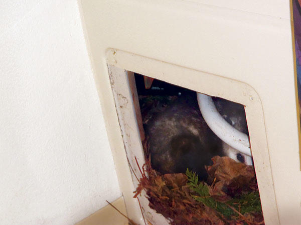 Before You Buy Home Inspection Services image 4