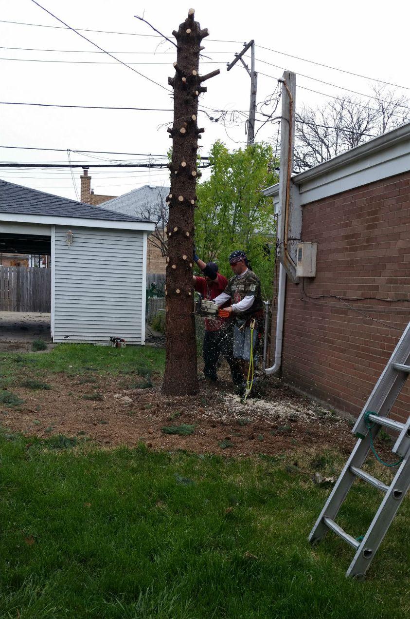 AJAX Tree Service image 3
