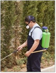 BUG OUT Pest Control image 2