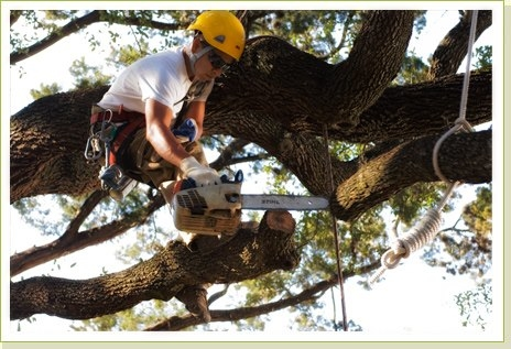 Houston Tree Service image 2