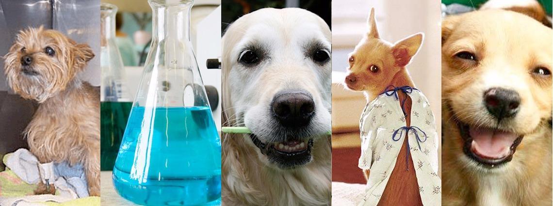 Wellesley Animal Hospital image 0
