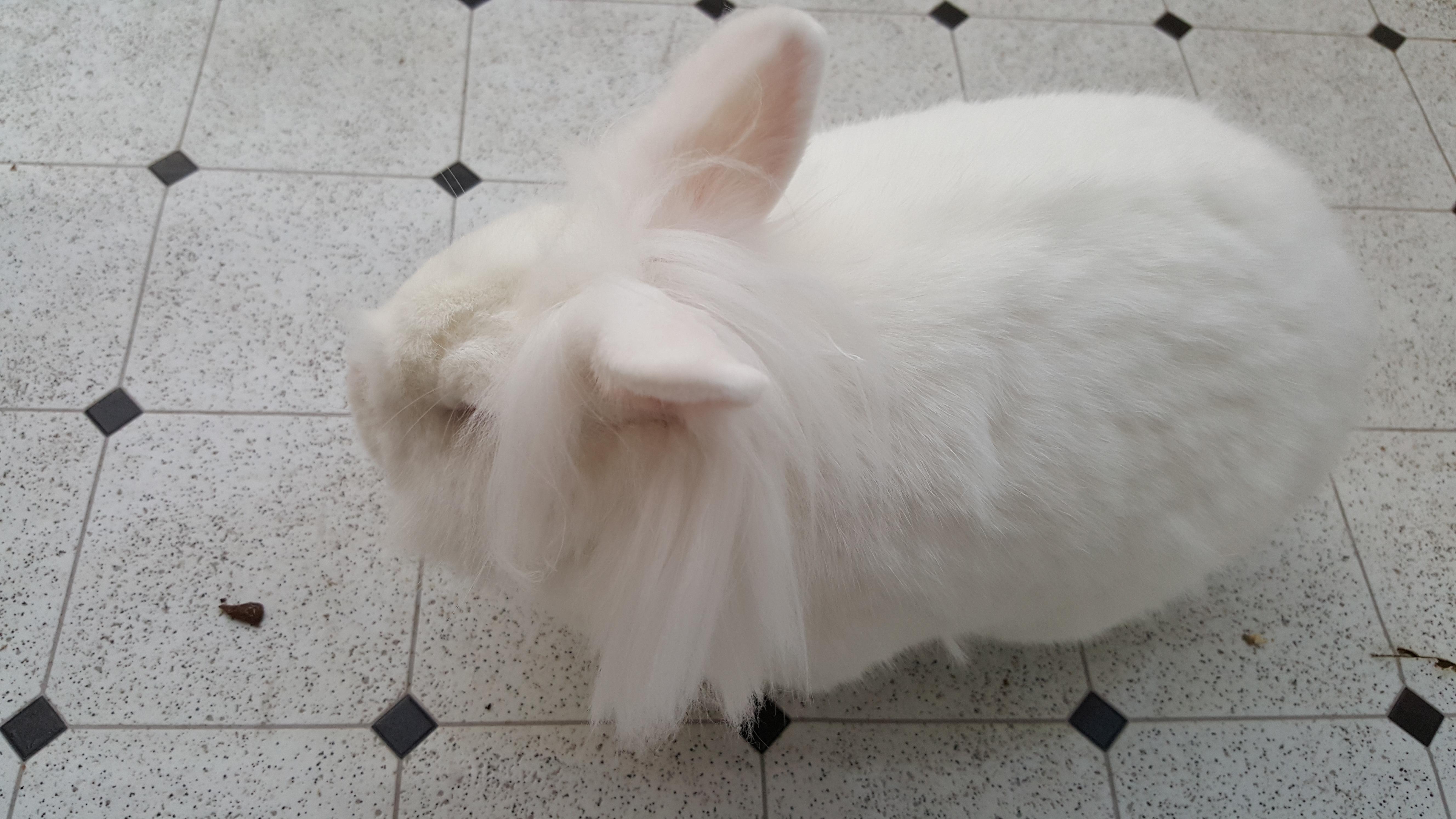 Wanda's Pet Service image 5