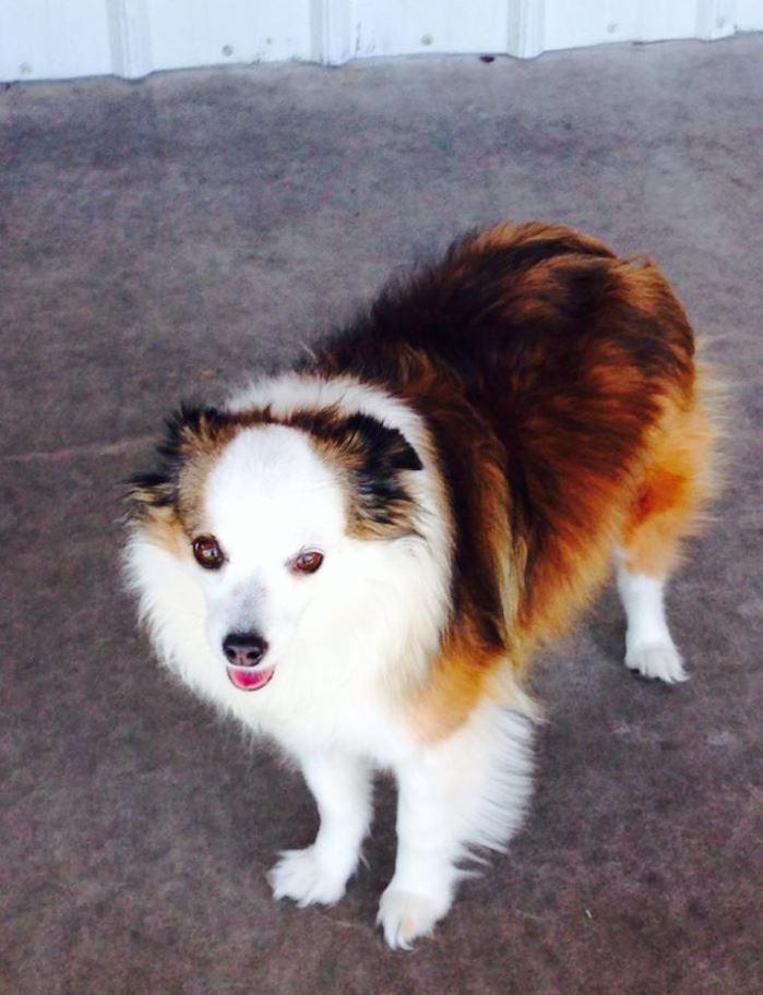 Doggie Daycare & Motel image 14
