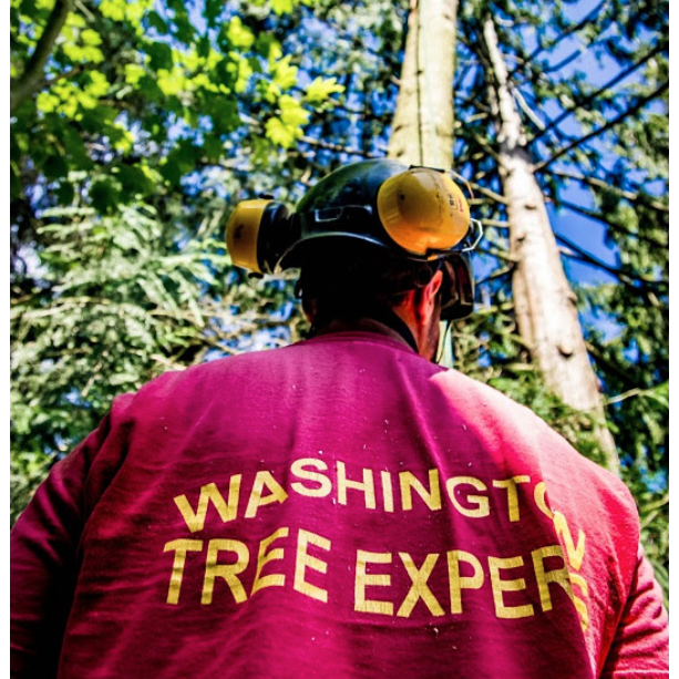 Washington Tree Experts