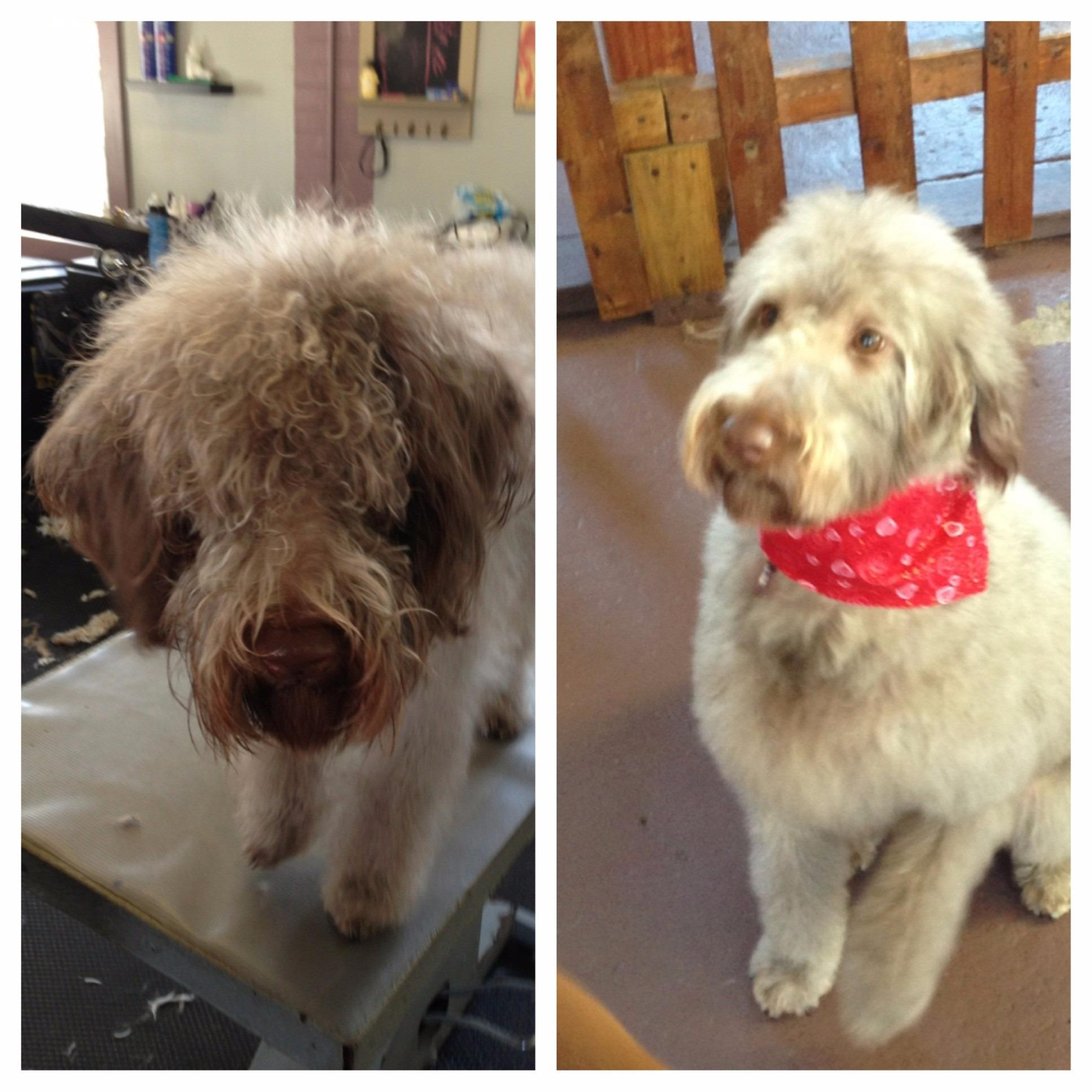 ALL Groomed UP image 8