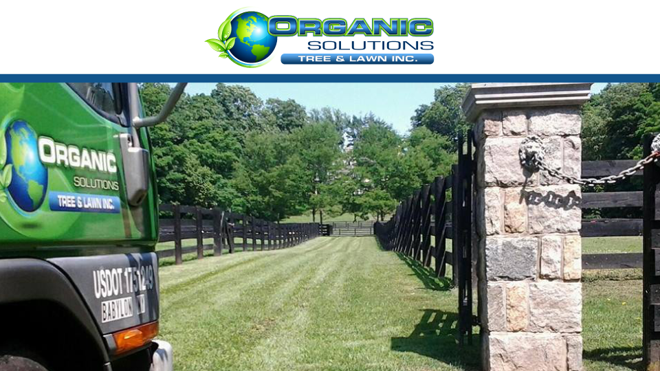 Organic Solutions Tree & Lawn Inc. image 0