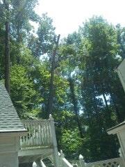 Holcomb Tree Experts image 6