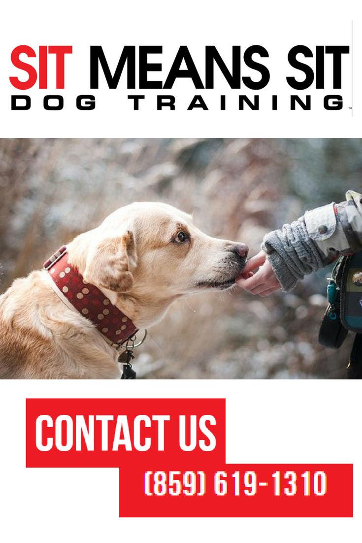 Sit Means Sit Dog Training of Lexington image 0