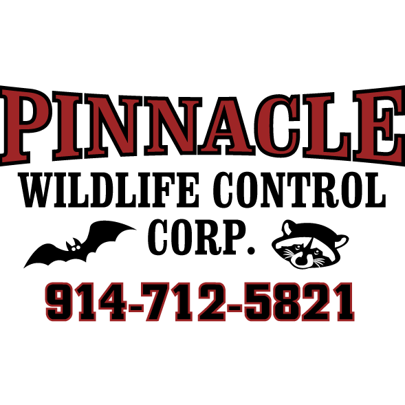 Pinnacle Wildlife control image 3