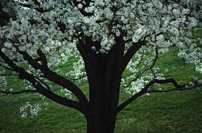Papendieck's Tree Service image 1