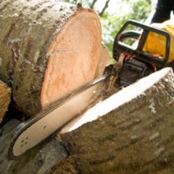 A&A Tree Service image 6