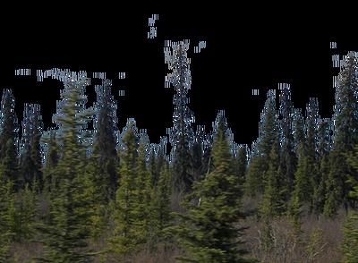 Spokane Septic Systems image 7