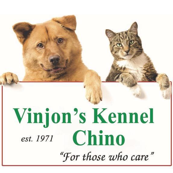 Vinjon's Kennel - Chino