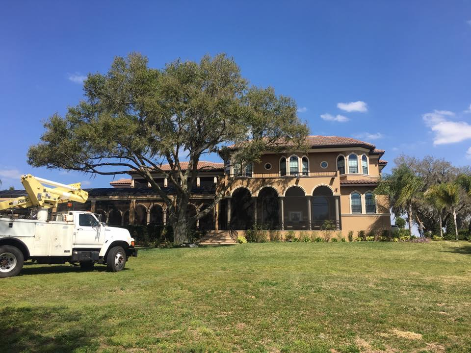 Removing a large live oak in tampa florida