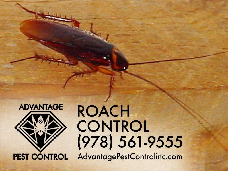Advantage Pest Control, Inc image 9