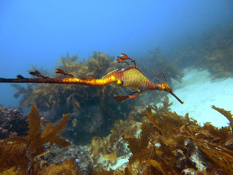 Abyss Scuba Diving