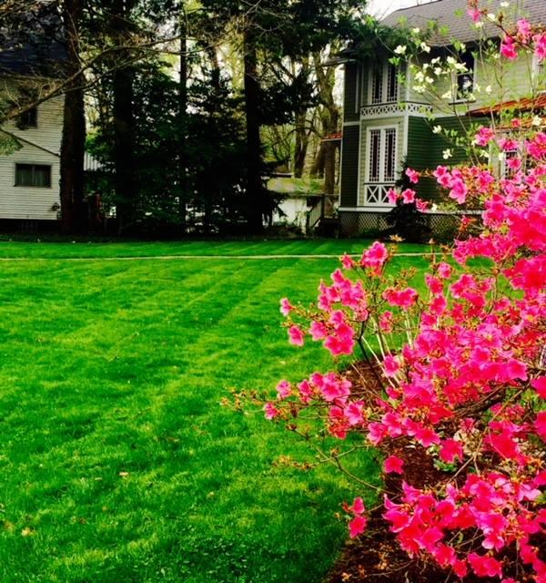 ZZ Lawn Care & Landscaping image 0