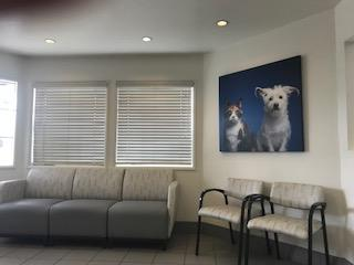VCA Alosta Animal Hospital image 3