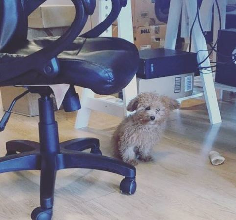 Our Long Island tech support office is pet-friendly too!