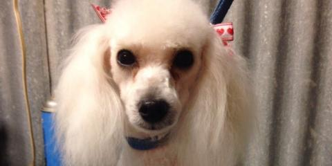 A1 Discount Dog Grooming image 0